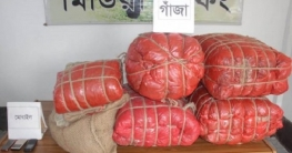 রংপুরে র্যাবের অভিযানে ৭৮ কেজি গাঁজাসহ মাদক ব্যবসায়ী আটক