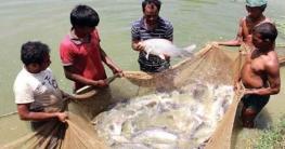 সারা বিশ্বে মাছ উৎপাদনে ২য় স্থানে বাংলাদেশ