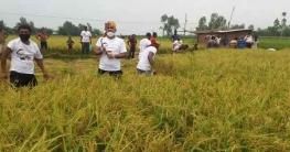 রংপুরে কৃষকের ৩ একর জমির ধান কেটে দিল ছাত্রলীগ