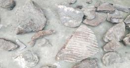 পীরগাছায় ২০০ বছর আগের হাতির কঙ্কাল উদ্ধার