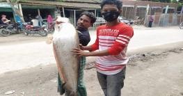 কুড়িগ্রামে ব্রহ্মপূত্র নদে জেলের জালে ১৫ কেজির বোয়াল মাছ