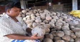 দুর্গাপূজা উপলক্ষ্যে বদরগঞ্জে নারিকেল বিক্রি বেড়েছে